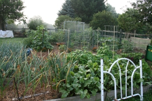 Organic gardening is easy, practical and cheap!
