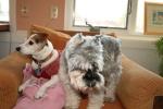 Dogs enjoying a break