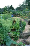 Green and organic garden in summer.