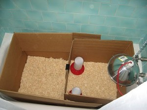 A homemade brooder from a box.