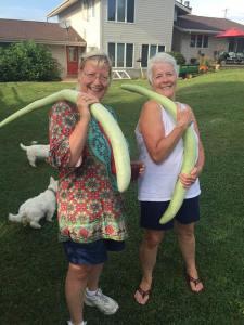 Growing giant Zucchini