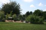 August heat baking my garden
