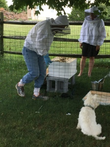 bees, beekeeping, organic gardening benefits