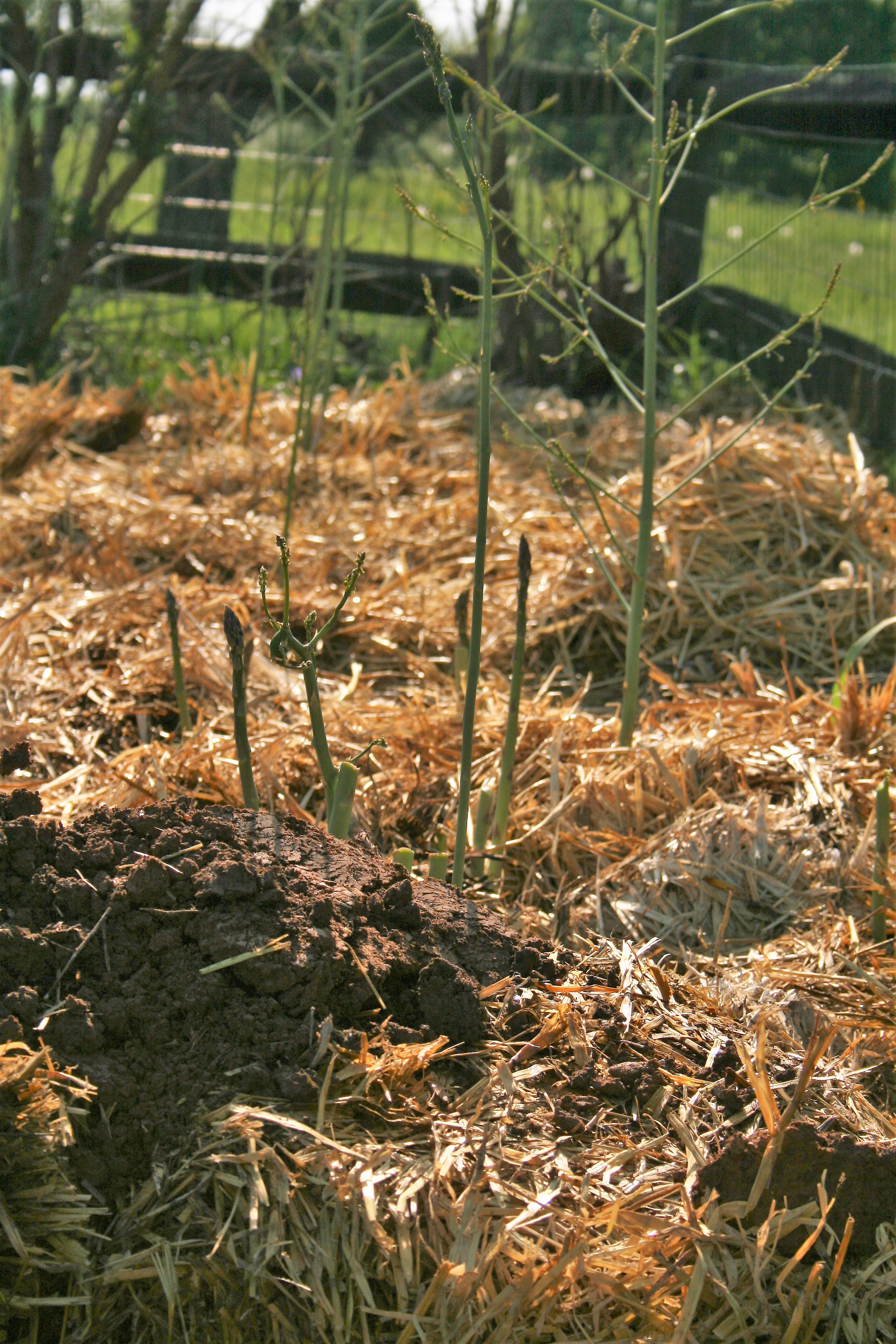 easy organic gardening | Grow So Easy Organic