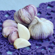 Territorial Seed has garlic