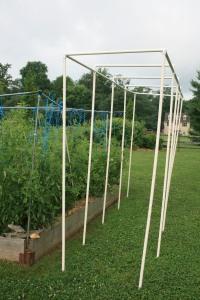 New tomato trellis