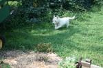 Linus loves the garden.