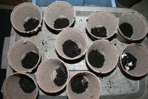 Soil and egg shells in peat pots