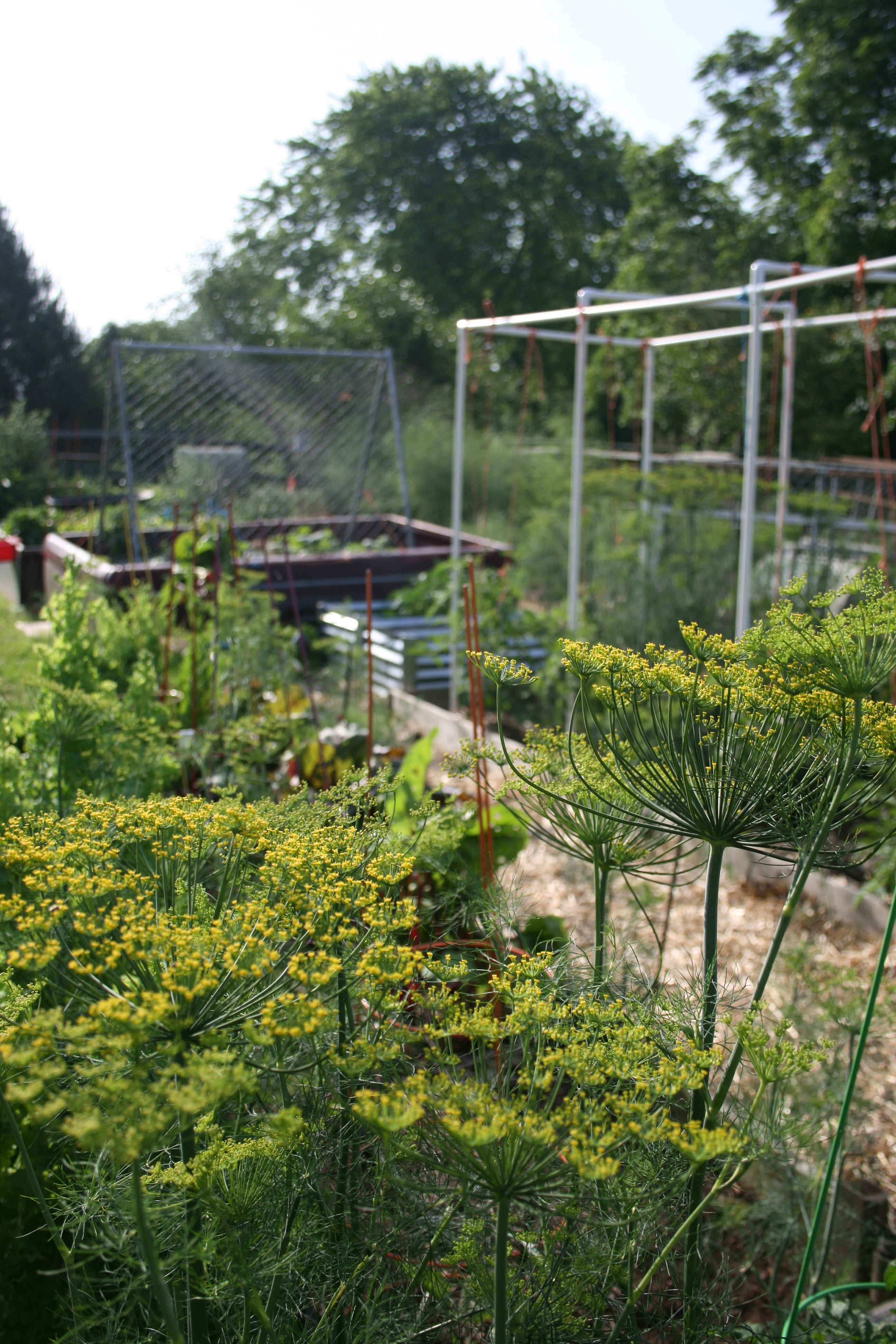 Good planning is key to a successful vegetable garden.